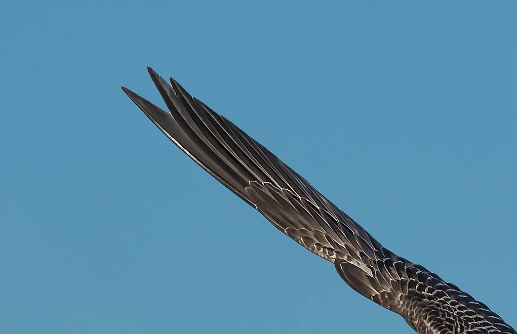 Vergrößerung des Flügels