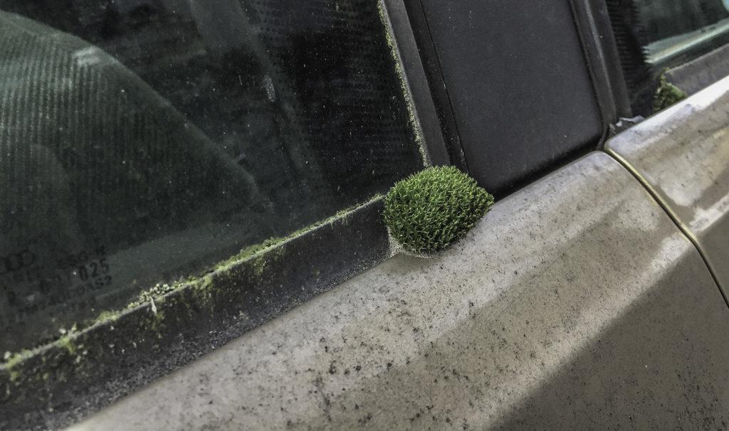 Das ungewaschenste Auto Deutschlands
