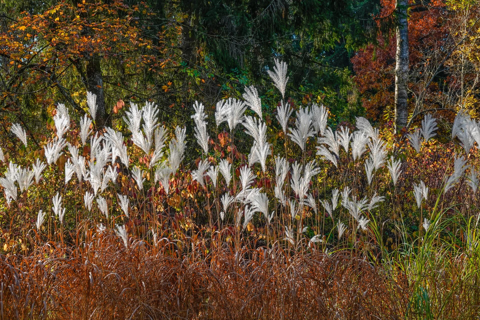 Blätter Herbstfarben