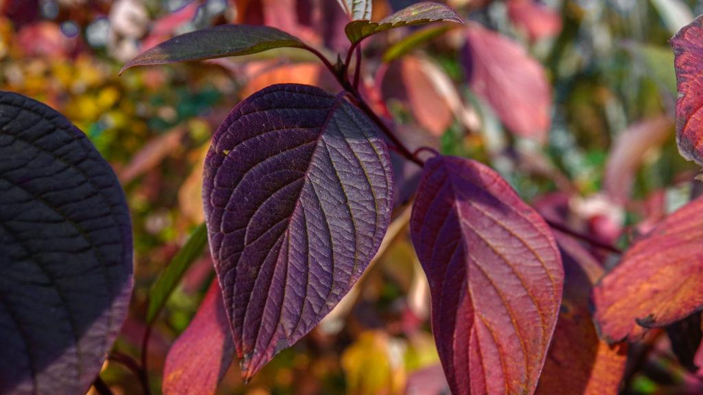 Blätter - Herbstfarben