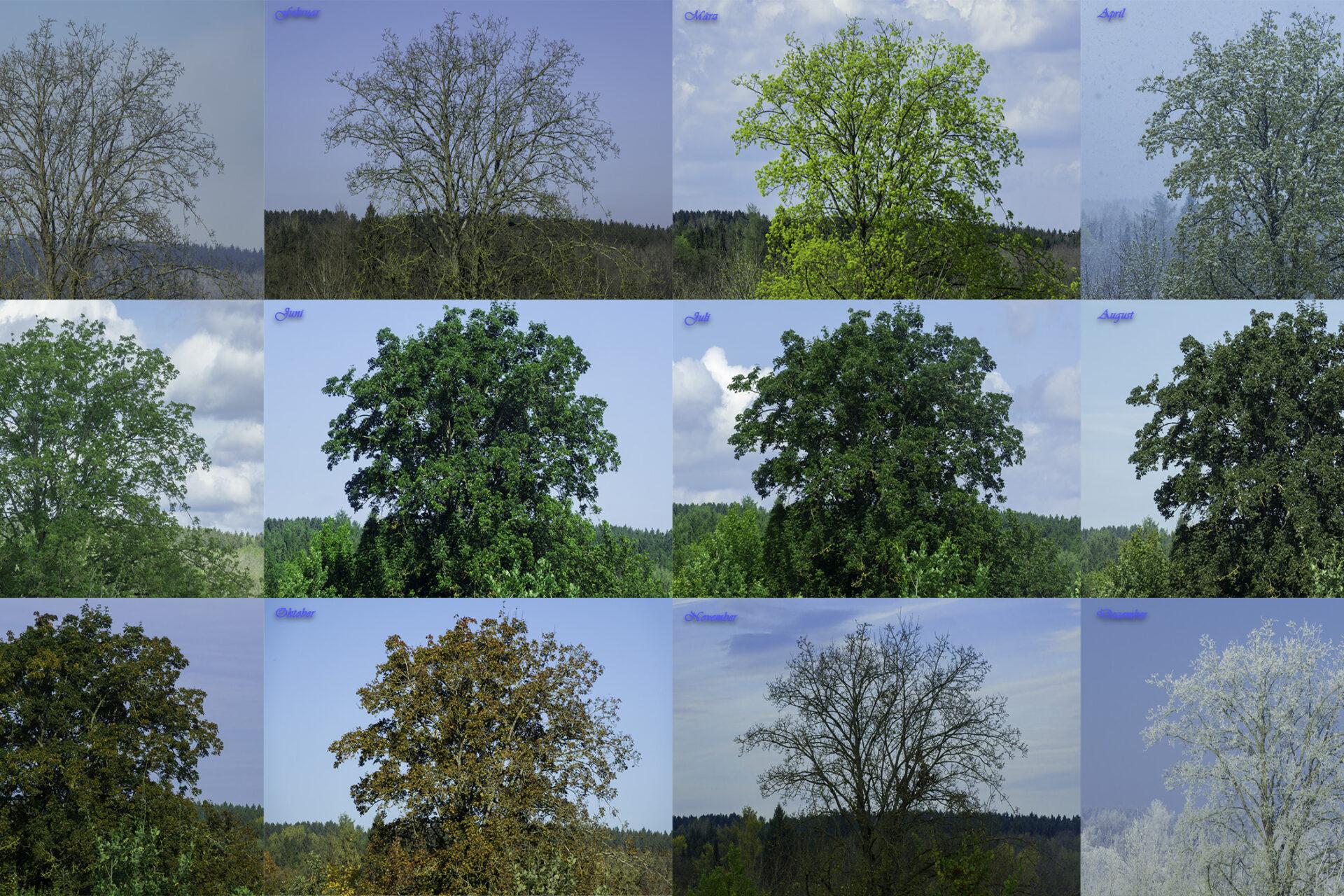 Jahreszeiten Baum