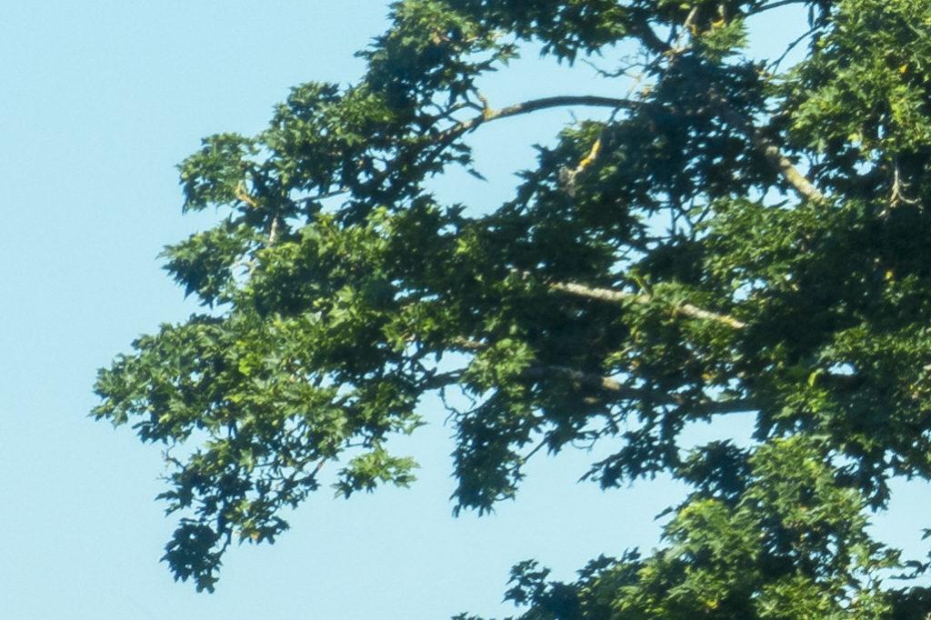 Jahreszeitenbaum Ausschnitt