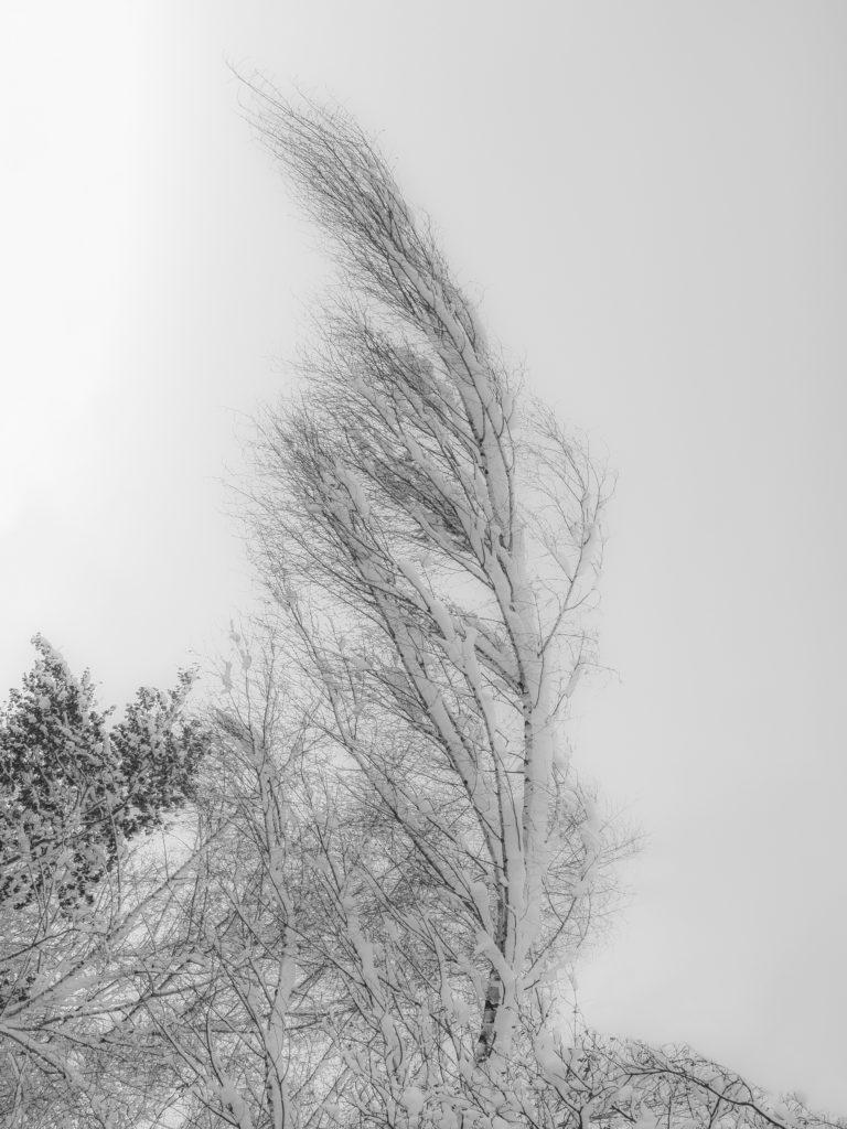 vorm dem Schnee